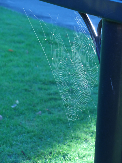 cobweb